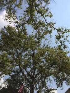 Tree Service Queens