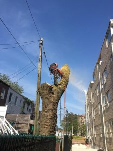 Queens Tree Removal